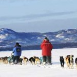 Dog Sledding in the Yukon, Photo by Mandatory Gov. of Yukin